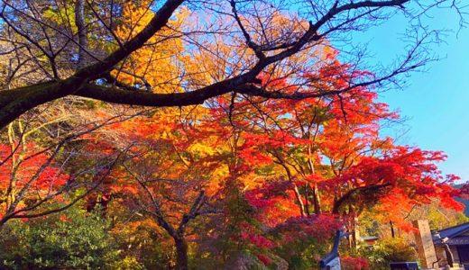 高尾山【初心者登山】時間や服装やケーブルカーなど